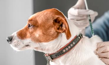 Все, що необхідно знати про щеплення домашніх тварин